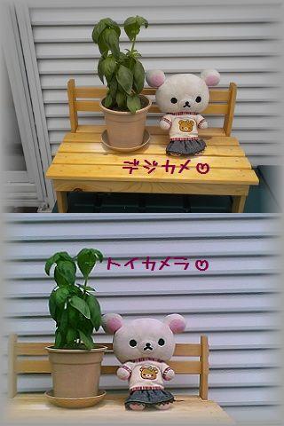 ちこちゃんの観察日記2011★その5★-5