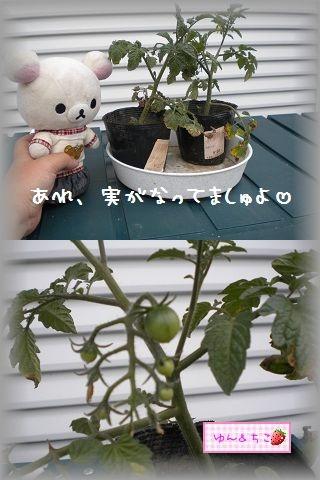 ちこちゃんの観察日記2011★その6★-2