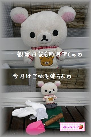 ちこちゃんの観察日記2011★その6★-1