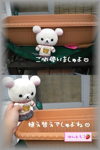 ちこちゃんの観察日記2011★その6★-3