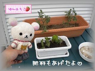 ちこちゃんの観察日記2011★その6★-6