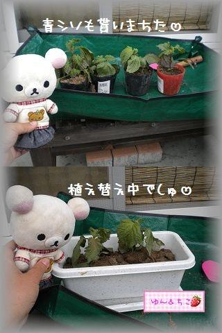 ちこちゃんの観察日記2011★その6★-5