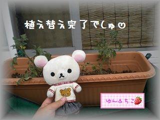 ちこちゃんの観察日記2011★その6★-4