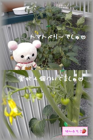 ちこちゃんの観察日記2011★その6★-7