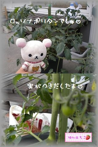 ちこちゃんの観察日記2011★その6★-8