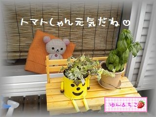 ちこちゃん日記★95★ちこちゃんの休息-2