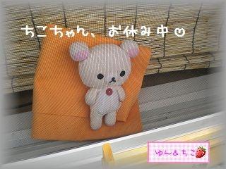 ちこちゃん日記★95★ちこちゃんの休息-1