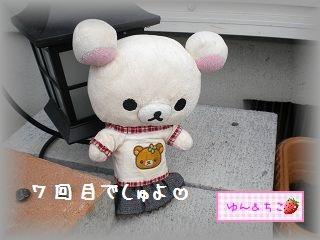 ちこちゃんの観察日記2011★7★大きくなったよ-1