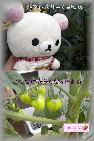 ちこちゃんの観察日記2011★7★大きくなったよ-3