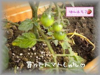 ちこちゃんの観察日記2011★7★大きくなったよ-2