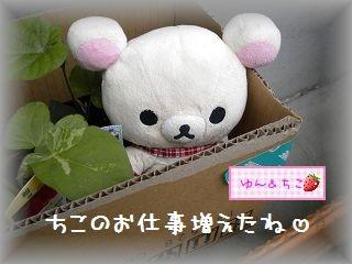 ちこちゃん日記★96★お仕事増えまちた♪-3