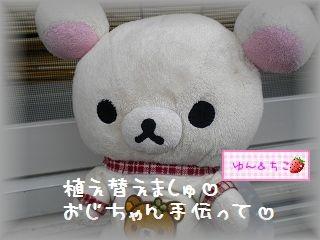 ちこちゃんのあさがお観察日記★1★-5