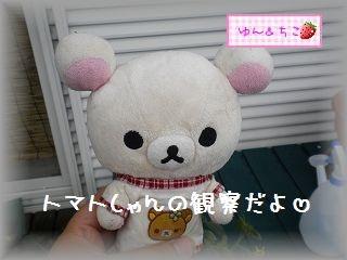 ちこちゃんの観察日記2011★8★-1