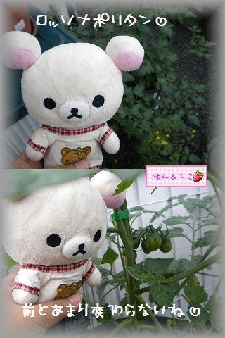 ちこちゃんの観察日記2011★8★-3