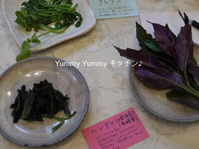沖縄野菜3