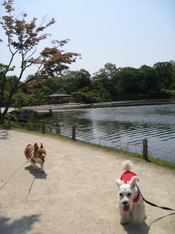 日本庭園を歩く6.3