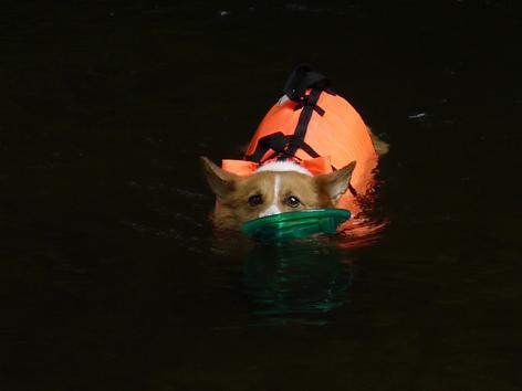 そして泳ぐ9.20