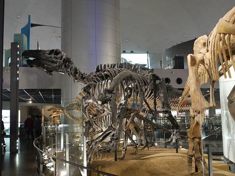 恐竜たち①