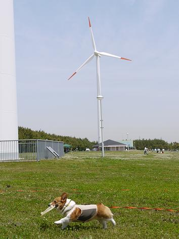 風力発電5.15