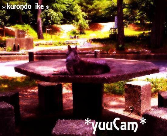 20116080202_convert_20110613151929.jpg