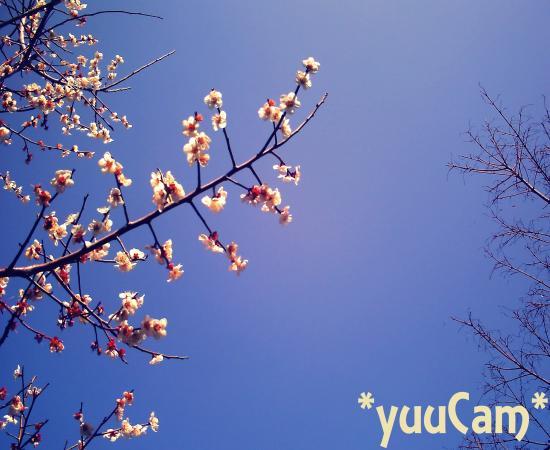 PICT2012032122_convert_20120321143943.jpg