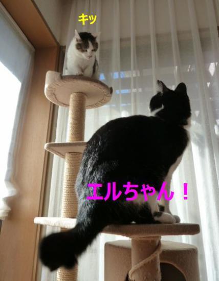 エルちゃん!