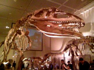 22マプサウルス