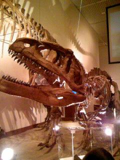 25マプサウルス子ども