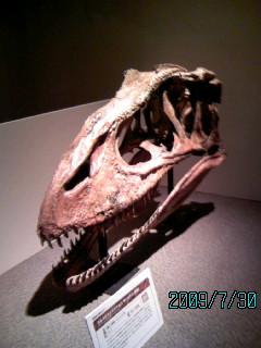 03カルカロドントサウルス