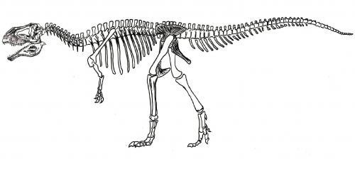 carcharodontosaurus2_convert_20120101013406.jpg