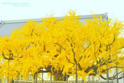 yuzu photo