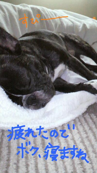 yuzu51.jpg