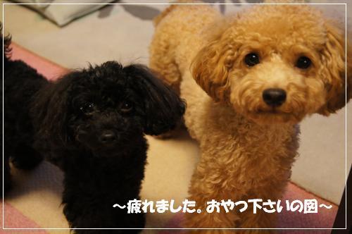 20101023yuzukosyo4Kk.jpg