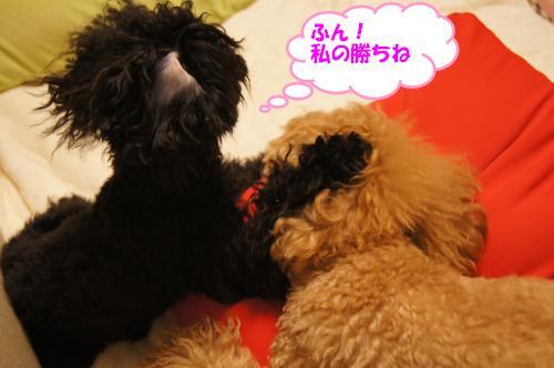 20101023yuzukosyo9k.jpg