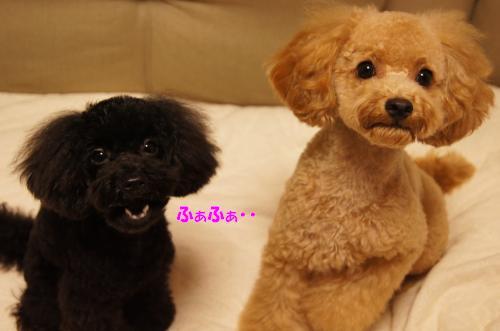 20101031yuzukosyo1k.jpg