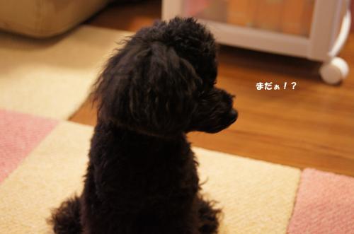 20101212kosyo1k.jpg