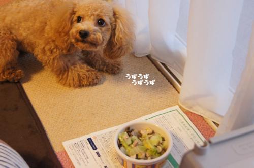 20101212yuzu2k.jpg