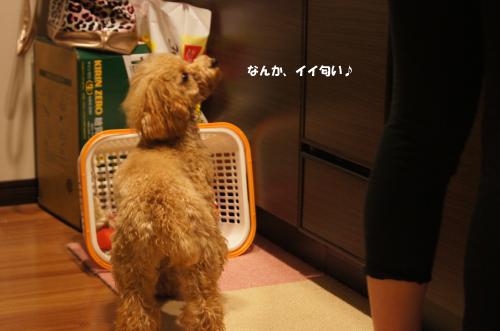 20101212yuzu4k.jpg