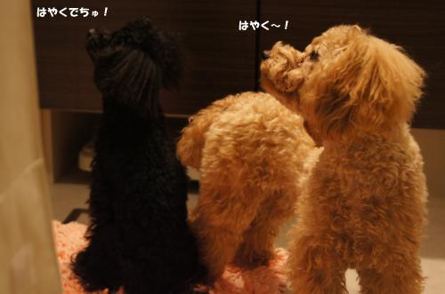 20101212yuzukosyo2k.jpg