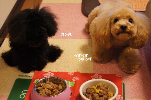 20101224yuzukosyo1k.jpg