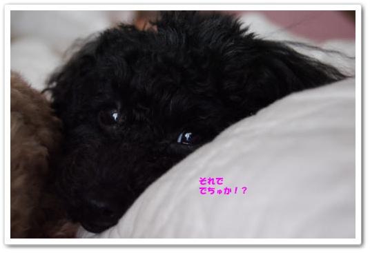 20110131kosyo2kk.jpg
