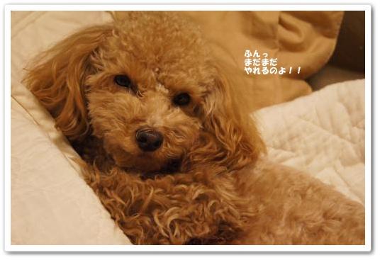 20110211yuzu1kk.jpg
