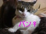 CIMG6225.jpg
