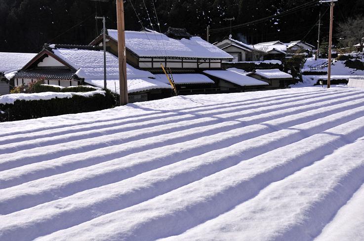雪の大原1