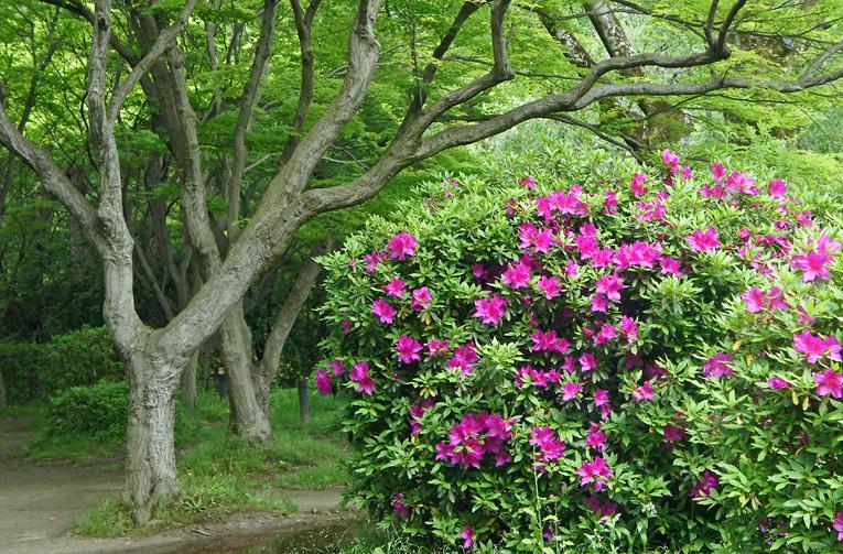240504植物園03