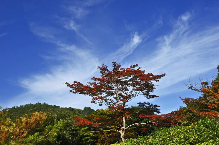 241026嵐山03N