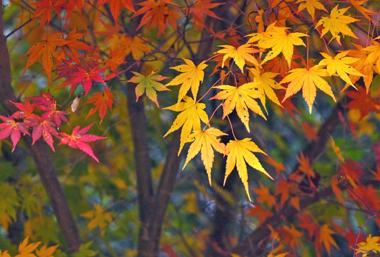 秋景(花脊)01