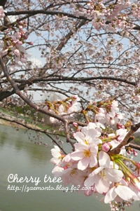 鶴見緑地公園の桜