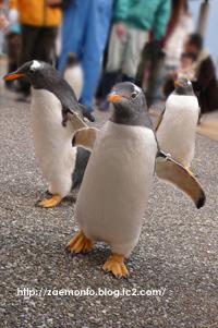 ペンギンよちよちウォーク