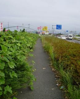 Sawara_Sep201015.jpg